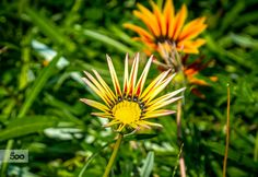 by Marius Ivan on Beautiful Pictures, Flowers, Plants, Florals, Planters, Flower, Blossoms, Plant, Planting