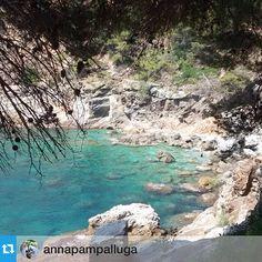 Imatges com aquesta ens fan tenir, encara, ganes d'estiu!! Gràcies per compartir al concurs #MySummeraRoses @annapampalluga --- Cala Lladó vist des del #camideronda #gr92 #MySummeraRoses #aRoses #VisitRoses #inCostaBrava