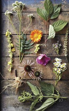 deb soule's list of healing plants//MS living