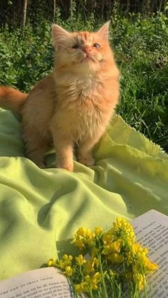 Pretty Animals, Cute Little Animals, Pretty Cats, Cute Baby Cats, Kittens Cutest, Cats And Kittens, Animals And Pets, Funny Animals, Photo Chat