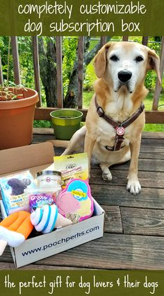 Find out more about the completely customizable dog subscription box - the perfect gift for dog lovers & their dogs #sponsored  Dog Mom | Dog Gifts | Dog Products | Rescue Dog | Life with Dogs