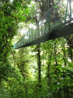 The suspension bridges in Monteverde Cloud Forest are the best way to see the jungle ecosystem.