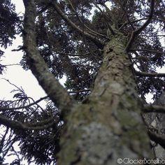 {9/365} Giant tree!!! ------------------- Árvore gigante!!! #photography #photo #glocierbotelho #nature #trees