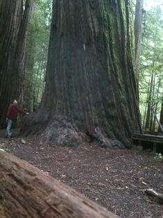 Humboldt Redwoods State Park, picture by John D Harvey