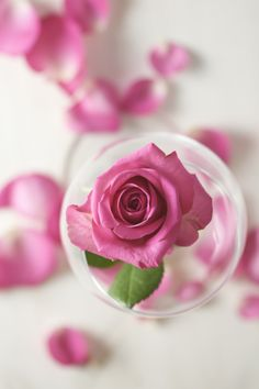 #Rose #Love