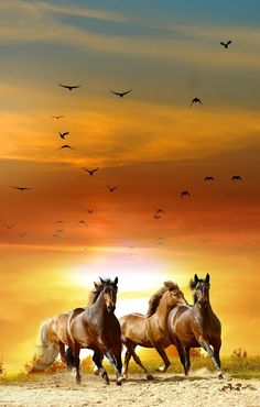 Explore amazing art and photography and share your own visual inspiration! Horse Photos, Horse Pictures, Nature Pictures, Beautiful Arabian Horses, Pretty Horses, Clydesdale, Cavalo Wallpaper, Animals And Pets, Cute Animals