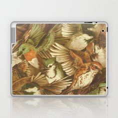 Red-Throated, Black-capped, Spotted, Barred Laptop & iPad Skin by Teagan White - $25.00
