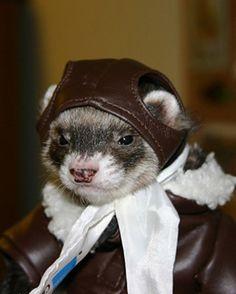 ferret is my co-pilot