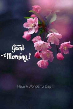 Beautiful good morning images with flowers Good Morning Sweetheart Quotes, Beautiful Morning Quotes, Good Morning Beautiful Pictures, Good Morning Inspirational Quotes, Good Morning Picture, Good Morning Flowers, Good Morning Good Night, Morning Pictures, Good Morning Images