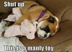 Man toy  http://bruiserbulldogs.com/