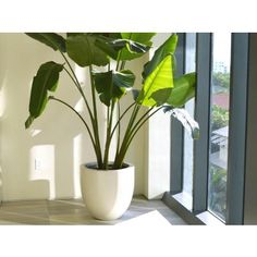 Use the Valencia Tapered Round Fiberglass Planter to bring outdoor elements into interior spaces without diminishing the characteristics that define the style and cha Rock Planters, Square Planters, White Planters, Large Planters, Indoor Planters, Outdoor Plants, Planter Pots, Contemporary Planters, Fiberglass Planters