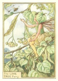 """""""The Lime Tree Fairy"""" by Cicely Mary Barker"""
