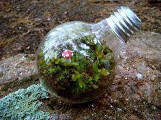 Creative Reuse: 10 Ways To Repurpose Light Bulbs diy Light Bulb Terrarium, Fairy Terrarium, Moss Terrarium, Light Bulb Crafts, Old Lights, Diy Décoration, Bud Vases, Indoor Plants, Small Plants
