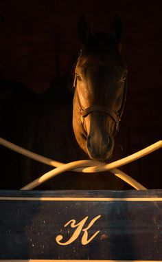Kentucky Derby Thoroughbred 2012
