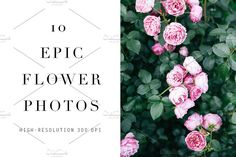 Stock Photos 10 Floral Images by Petra Veikkola on @creativemarket