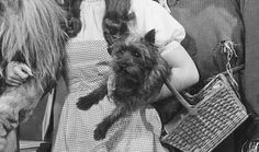Toto (Frank L. Baum, The Wizard of Oz).    He was smart enough to pull aside the Wizard's curtain -- we might still be in Oz if he hadn't!