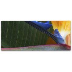 Trademark Fine Art Bird of Paradise Abstract Canvas Art by Kurt Shaffer, Size: 20 x 47, Yellow