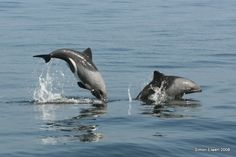 Creature Feature – Types of Dolphins plus 20 Dolphin Facts | Danielle's Dives Blog
