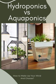 So, what's the difference between hydroponics and aquaponics? Which ones are better, and which ones provide better and healthy food? Let's find out in this hydroponics VS aquaponics battle!