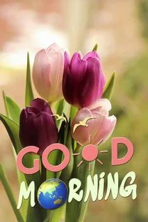 Love Good Morning Quotes, Funny Good Morning Images, Good Morning Images Flowers, Latest Good Morning Images, Good Morning Beautiful Images, Good Morning Happy Sunday, Good Morning Photos, Good Morning Messages, Good Morning Greetings