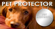 Best Oral Tick Protector For Dogs