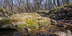 DOWNLOAD :: https://vectors.work/article-itmid-1007340967i.html ... Spring Creeks Are In The Morning Forest ...  brook, cascade, creek, forest, green, moss, mossy, nature, river, rock, stone, stream, water, waterfall, wild  ... Templates, Textures, Stock Photography, Creative Design, Infographics, Vectors, Print, Webdesign, Web Elements, Graphics, Wordpress Themes, eCommerce ... DOWNLOAD :: https://vectors.work/article-itmid-1007340967i.html