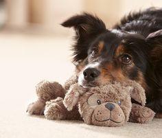 Einfach niedlich: #Hunde-Kuschelhund mit Quietschfunktion für €8,95 bei #Tchibo
