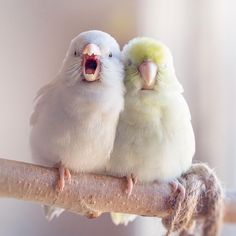 Dreamy Photographs Of Pastel-Colored Parrotlets That Will Get You Into Valentine's Day Mood