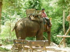 Elephants are being taken from their families and raised under horrific conditions for tourist attractions in Thailand. Help stop this cruel industry from abusing any more of these intelligent animals.