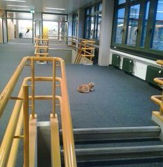 Cat Comes To University Every Day To Help Students With Cuddles - We Love Cats and Kittens