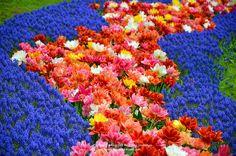 #Tulip #Keukenhof #Netherlands #Travel #holland4thai #เที่ยวเนเธอร์แลนด์บายเจี๊ยบ #ทัวร์ยุโรป