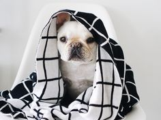 Reversible grid blanket. (black and white) 100% cotton. Very soft. It's perfect for cuddling with your dog. Great accent piece to complement any room. Measurements: 56 x 45 in -142 x 114 cm