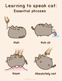 Pusheen the cat- Learning to speak cat! She is so fluffy and cute and lazy :)