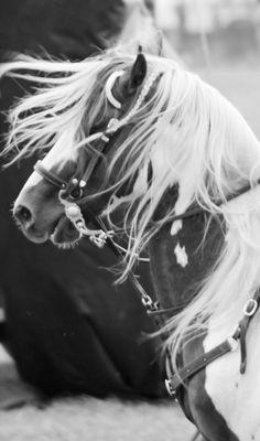 Fifi Lapin blog  Beautiful Horse