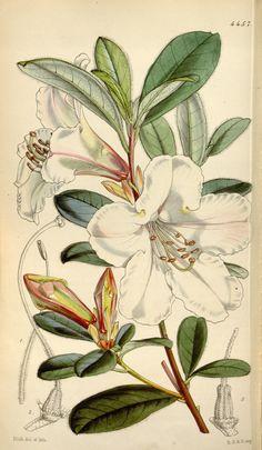 v.75=ser.3:v.5 (1849) [no.4417-4485] - Curtis's botanical magazine…