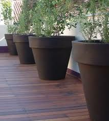 The Home And Office Garden For The Larger Specimen Plants A Wide .