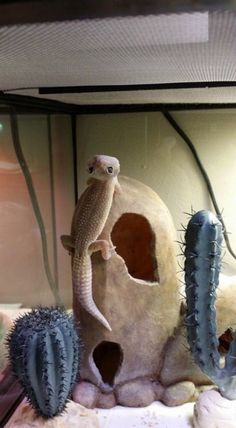 My leopard Gecko! Cute Lizard, Cute Gecko, Cute Snake, Cute Reptiles, Reptiles And Amphibians, Funny Lizards, Pet Lizards, Cute Little Animals, Cute Funny Animals