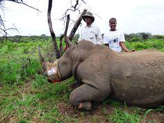 Rural communities are saving rhinos!