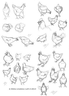 Chicken Sketches by Gwennafran.deviantart.com on @DeviantArt