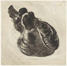 anoniem | Anatomische studie van een menselijk hart, attributed to Jan l' Admiral, 1700 - 1750 |