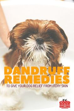 If your dog has dandruff and dry skin, check out these natural remedies and over the counter solutions to your dogs itchy skin and flaky dandruff. #dogcare #dogdandruff #doggrooming