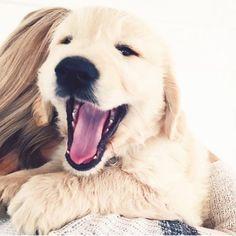 Weekend feels  Via @momentaryhappiness www.coffeenotcoffee.com.au #happy #puppy #weekend