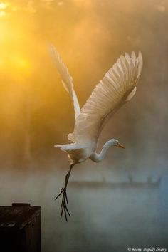 Amazing Grace | the Egret