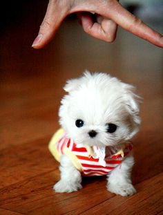 omg, so cute! But I'd be soooo afraid I'd step on him/her so I'd have to keep it in a pocket.