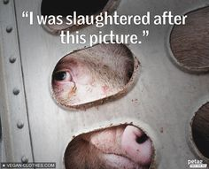 Millions of animals like her are killed & forgotten.  Never forget.  #GoVegan