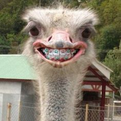 This ostrich with braces is so cute and festive, even though it isn't Christmas anymore... oh well?!