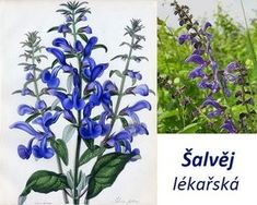 Medicinal Plants, Kraut, Life Is Good, Flora, Remedies, Homemade, Gardening, Healthy, Nature