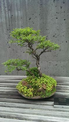 Bonsai ~The North Carolina Arboretum