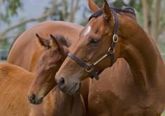 Miss Finland (AUS) & her G1 winning filly Stay With Me (AUS)