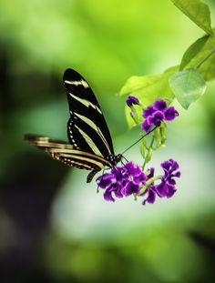 como la mariposa, despliega sus alas y se transforma